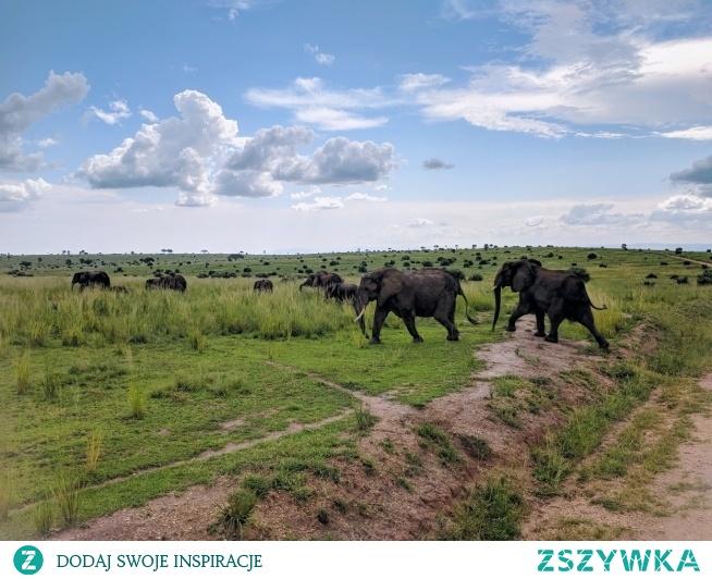 Safari - Uganda