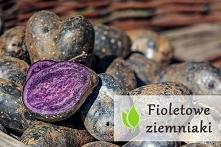 Fioletowe ziemniaki - właśc...