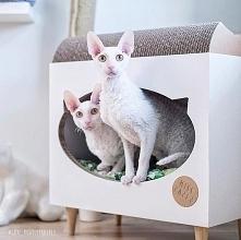 TVcat domek+ drapak dla kota