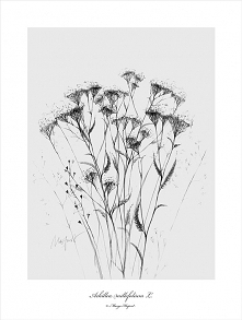 Krwawnik print | 50x70 cm