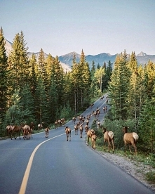 Park Narodowy Banff (Kanada)