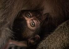 Małpki w Tajlandii - Railay