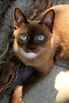 Oczy !