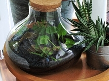 W naszym sklepie dostępny piękny wazon z korkiem. Stwórz własny las w słoju! ...