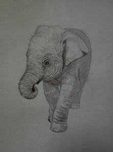...  Słoń