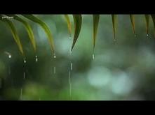เพลงสปาผ่อนคลาย Relaxing Music & Soft Rain