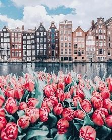 Tulipany i kamienice, Amste...