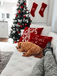 98 dni do świąt. Kiedy zaczynacie słuchać świątecznych piosenek?