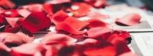 Płatki róży właściwości są ...