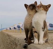 Miłość wisi w powietrzu *.*...