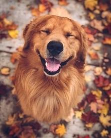 Ja czuje jesień tak jak ten...
