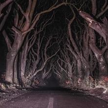 Dark Hedges - droga w Irlan...