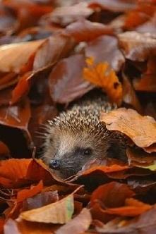 Jesień ahh to Ty!