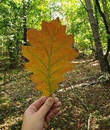 Kolory jesieni powoli zaczy...