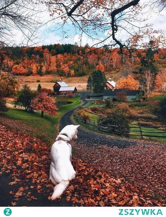 Taka jesień jest najfajniejsza ^.^