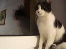 Kot sam się przedstawia (kl...