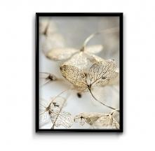 Jesienna hortensja #1