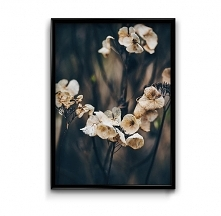 Jesienna hortensja #2