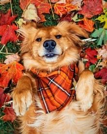 Ja kocham jesien, a Ty? :D