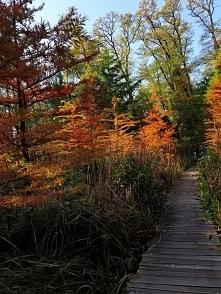 Arboretum Bolestraszyce, pi...