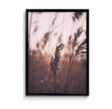 Trawy - plakat