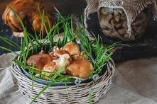 Sezon na grzyby. Przetwory z grzybów i owoców, słone przekąski.