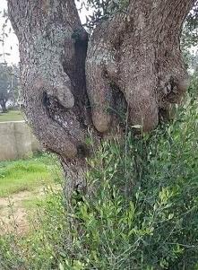 Gdyby drzewa dawały Wi-Fi ,...