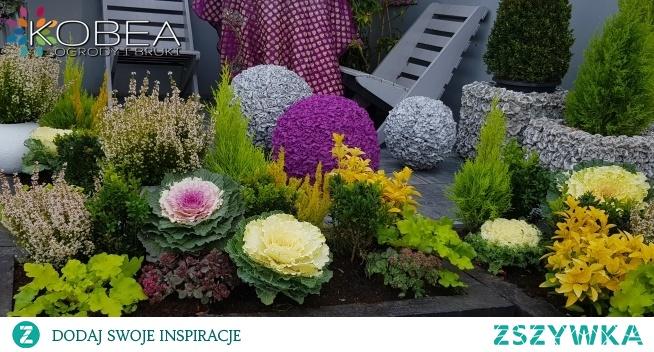 Jesienne dekoracje i ozdoby do ogrodu-Kobea Ogrody i Bruki Ewa Tyrna