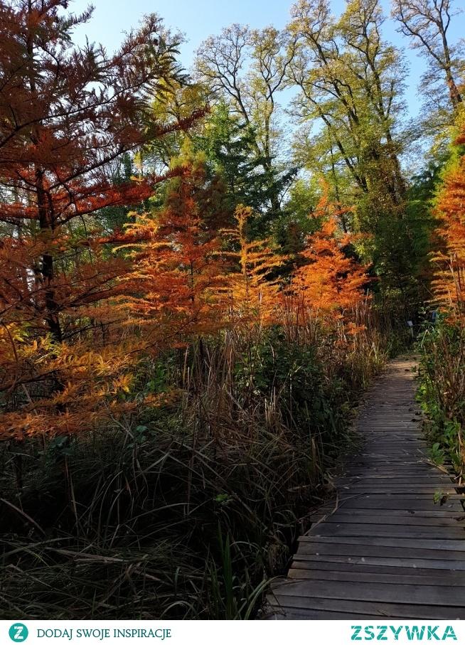 Arboretum Bolestraszyce, piękne miejsce na spacer