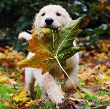 *.*Jesień z psem