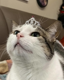 I'm the princess :)