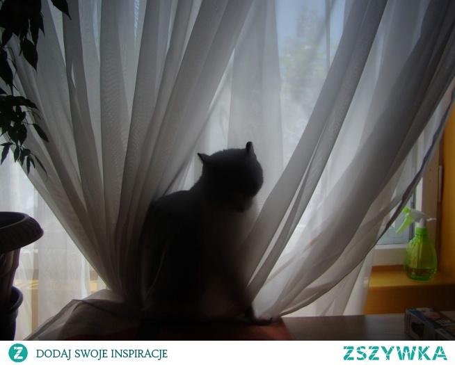 Dziwne i śmieszne nawyki kotów (klik):)