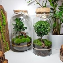 Las w słoju