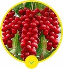 Member XXL to unikalny produkt, który bazuje w 100% na bezpiecznym i organicz...