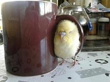 Robimy herbatkę i będzie przyjemnie.