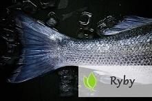 Ryby - rodzaje i wpływ na z...