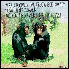 Światowy dzień Małpy