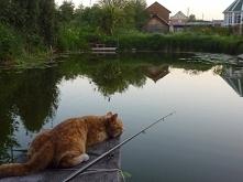 Wędkowanie , ryba na święta .