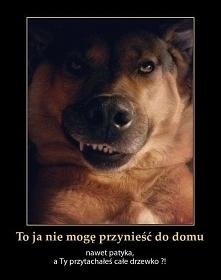 Mina psa - bezcenna