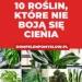 10 roślin, które nie boją się cienia