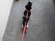 Kot kontra śnieg - z punktu...