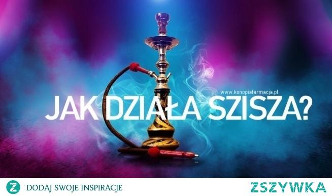 """Prawdziwa popularyzacja fajki wodnej na masową skalę nastąpiła ok. 500 lat temu, wraz z pojawieniem się jej w Turcji, gdzie stała się bardzo popularna wśród klasy wyższej, a także intelektualistów, szybko stając się nieodzownym elementem spotkań i rozmów.  Fajka wodna """"shisha"""" składa się z 4 części:  Miska - miska to miejsce na tytoń/susz. Wazon - dym przechodzi przez wodę w wazonie w celu chłodzenia i filtrowania Trzon - to pionowa rura od miski do wazonu. Wąż - do zasysania dymu.    Susz/tytoń jest ładowany do miski. Miska jest przykryta folią aluminiową , która jest posiada małe otwory. Na folii kładziemy gorące węgle, które podgrzewają np. tytoń i powietrze, które przechodzi przez węgiel do miski.  Ciepły tytoń uwalnia opary, które mieszają się z powietrzem i wytwarzają dym sziszy.  Dym sziszy przechodzi przez pionowy trzon i wychodzi z jego czubka, który znajduje się 2-3 cm pod powierzchnią wody. Gdy opuszcza końcówkę i porusza się w górę do pewnej powierzchni wody, jest tam filtrowany i chłodzony. Następnie dociera do użytkownika przez wąż.  Susz do waporyzacji znajdziesz w naszym sklepie www konopiafarmacja pl"""