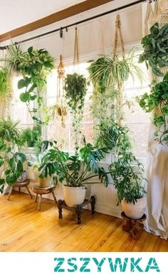 plants hanging from rod