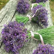 Medical lavender (Lavendula...