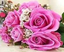 #pinkroses #rosa #chamelanc...
