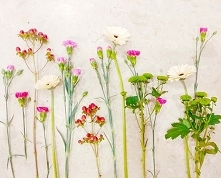 #flowertips #flowers_super_...
