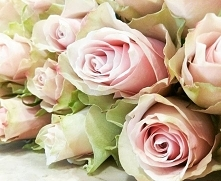 Różowa róża to symbol  wdzi...
