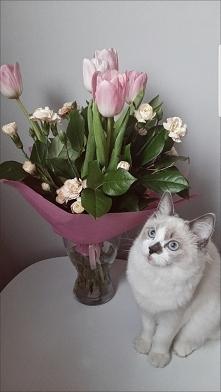 dziś dzień kota :)