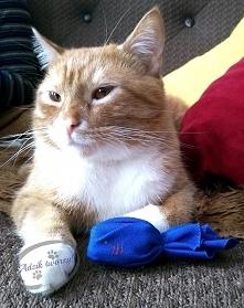 Zabawka DIY dla kota z kork...
