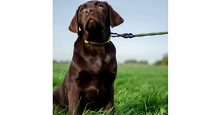 Smycz dla psa z amortyzorem